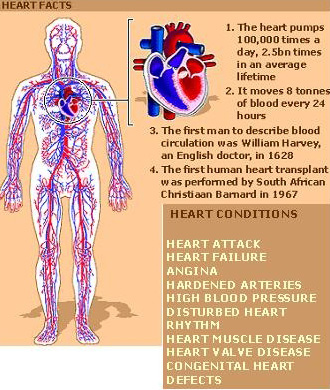 heart-facts